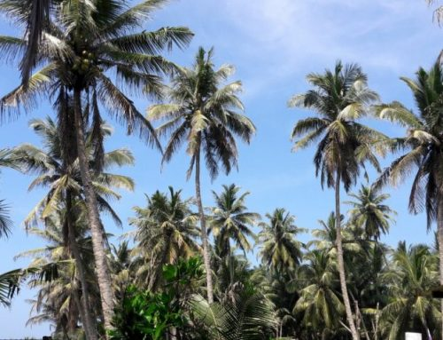 4 tips voor Sri Lanka   Derdewereldland waar je veel van zult leren!