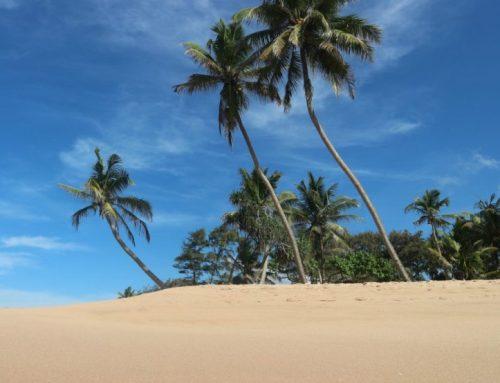 Sri Lanka vlog | Dit was mijn maand alleen in Sri Lanka!
