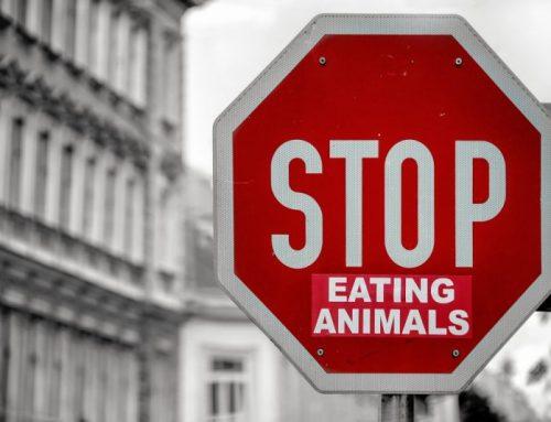 Lifestyle | Mijn tips om vegetariër te worden