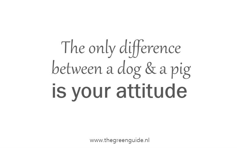The only difference between a dog & a pig is your attitude
