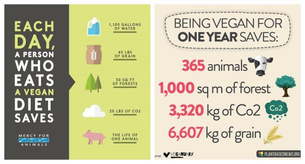 Vegan voor het milieu